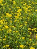 Wildflowers di raccolto fotografia stock