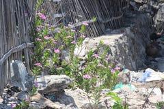 Wildflowers dichtbij Mayangan-Strand, Probolinggo, het Oosten Java Province, Indonesië stock fotografie