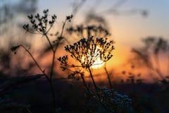 Wildflowers dichte omhooggaand tijdens zonsopgang in de zomer royalty-vrije stock foto's