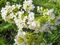 Wildflowers, die auf Berg Sulaiman-Too in Osh-Stadt wachsen Lizenzfreies Stockbild