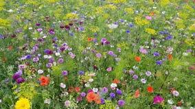Wildflowers die in de wind slingeren stock footage