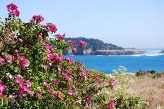 Wildflowers, die den Pazifischen Ozean umgeben Stockbilder