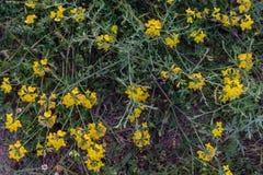 Wildflowers, die in der Feldnahaufnahme wachsen Lizenzfreie Stockfotografie