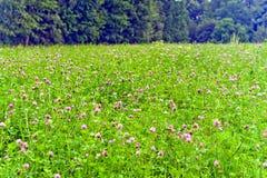 Wildflowers, die in der Wiese blühen Stockfotografie