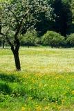 Wildflowers die op Gebied tot bloei komt Stock Afbeeldingen