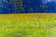 Wildflowers die in weide bloeien Royalty-vrije Stock Afbeeldingen