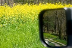 Wildflowers and dirt road/mirror. A patch of yellow wildflowers on the side of a dirt road with a road view in the side mirror Royalty Free Stock Photo