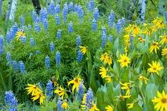 Wildflowers do verão das montanhas rochosas Foto de Stock