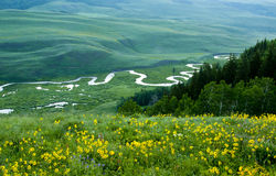 Wildflowers do verão e rio de fluxo. Foto de Stock