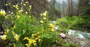 Wildflowers door de rivierenrand stock afbeeldingen