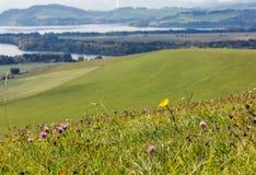 Wildflowers dos montes do verão perto do lago Liptovska Mara, Eslováquia Imagens de Stock Royalty Free