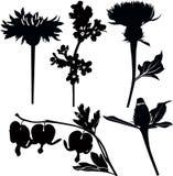 Wildflowers drugs. Isolated on white background royalty free illustration