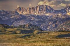 Wildflowers du Wyoming de premier plan et montagnes de dent de scie photos libres de droits