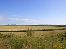Wildflowers e campos de trigo modelados no verão Fotos de Stock Royalty Free