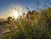 Wildflowers e cielo blu nei raggi del tramonto immagini stock