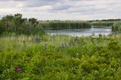 Wildflowers e lo stagno ad ovest Immagini Stock Libere da Diritti