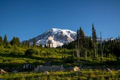 Wildflowers e o Monte Rainier bonitos, estado de Washington imagem de stock