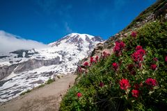 Wildflowers e o Monte Rainier bonitos, estado de Washington imagens de stock royalty free