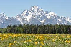 Wildflowers e picchi di montagna immagine stock libera da diritti