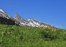 Wildflowers e picco della gamma di Churfirsten Fotografie Stock Libere da Diritti