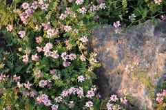 Wildflowers e rocha Foto de Stock Royalty Free