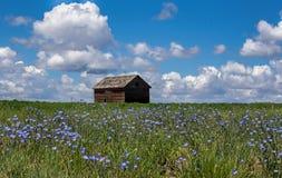 Wildflowers e uma construção velha Fotos de Stock Royalty Free