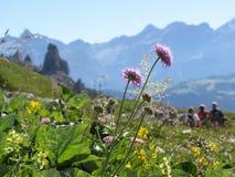 Wildflowers e vegetazione italiani della montagna delle dolomia ad estate con la famiglia sul paesaggio pieno d'ammirazione del f Fotografie Stock Libere da Diritti