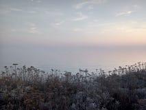Wildflowers ed oceani Fotografia Stock Libera da Diritti