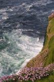 Wildflowers ed oceano Fotografie Stock