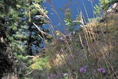 Wildflowers effilés scéniques Photos libres de droits