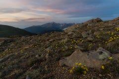 Wildflowers em Rocky Mountain National Park fotos de stock