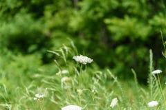 Wildflowers em um dia de mola atrasado morno fotos de stock