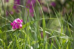 Wildflowers em um prado fotografia de stock