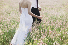 Wildflowers em um prado em um dia ensolarado Disparado com um foco seletivo Fotos de Stock