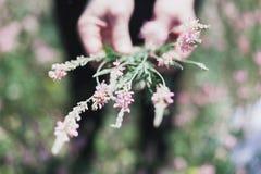 Wildflowers em um prado em um dia ensolarado Disparado com um foco seletivo Imagem de Stock Royalty Free