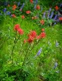 Wildflowers en desierto de montañas fotos de archivo