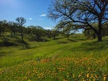 Wildflowers en eiken langs weelderige aardweg royalty-vrije stock afbeeldingen
