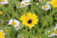 Wildflowers en el castillo de Lowther fotografía de archivo libre de regalías