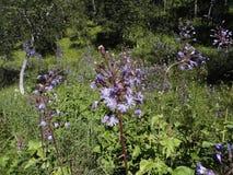 Wildflowers en el norte de Suecia Foto de archivo libre de regalías