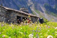 Wildflowers en el sitio para acampar indio del grupo de la barra en el soporte Rainier National Park fotografía de archivo