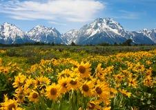 Wildflowers en el Tetons magnífico fotografía de archivo