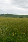 Wildflowers en el valle multíple, Staffordshire, Inglaterra Imagen de archivo libre de regalías