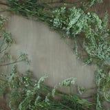 Wildflowers en fondo de madera Imagen de archivo
