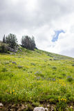 Wildflowers en Hemel Stock Fotografie