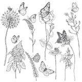 Wildflowers en insectenschets stock illustratie