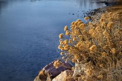 Wildflowers en invierno a lo largo del banco del río Arkansas Imágenes de archivo libres de regalías