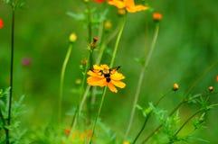 Wildflowers en la brisa con la abeja de la polilla del pájaro del tarareo Fotos de archivo