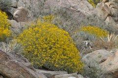 Wildflowers en la floración en la ladera Imagen de archivo libre de regalías