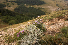 Wildflowers en la ladera foto de archivo