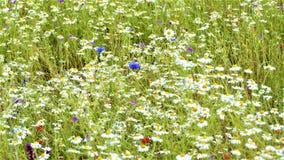 Wildflowers en los prados foto de archivo